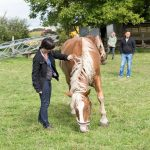 Interaktion mit Pferden - BUKO 2016 - Fotograf Ulf Pieconka - Würzburg